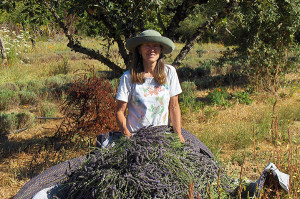 Monique Camp with her Biodynamic Lavender Harvest